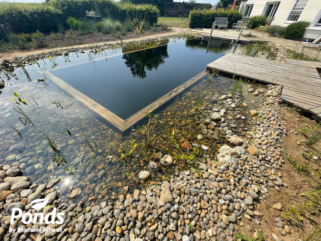 Swimpond Project - Suffolk - The Pond In Summer 2021