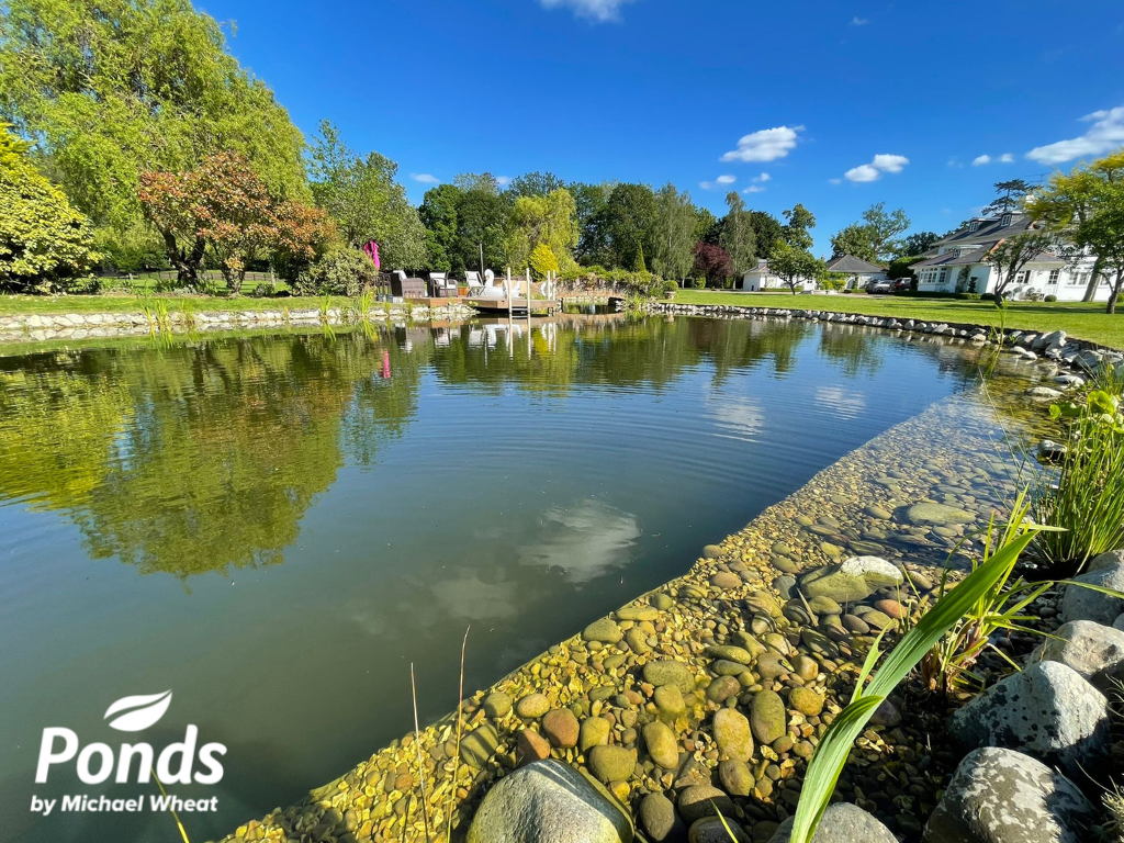 Swimpond Project - Windsor - The Pond In Summer 2021