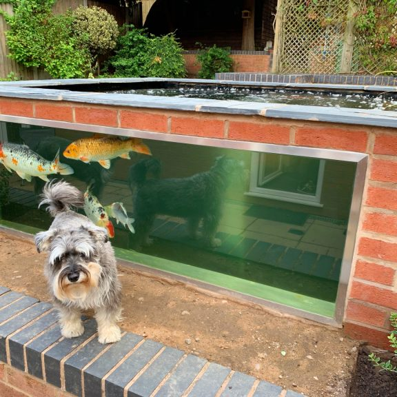 Koi pond with dog