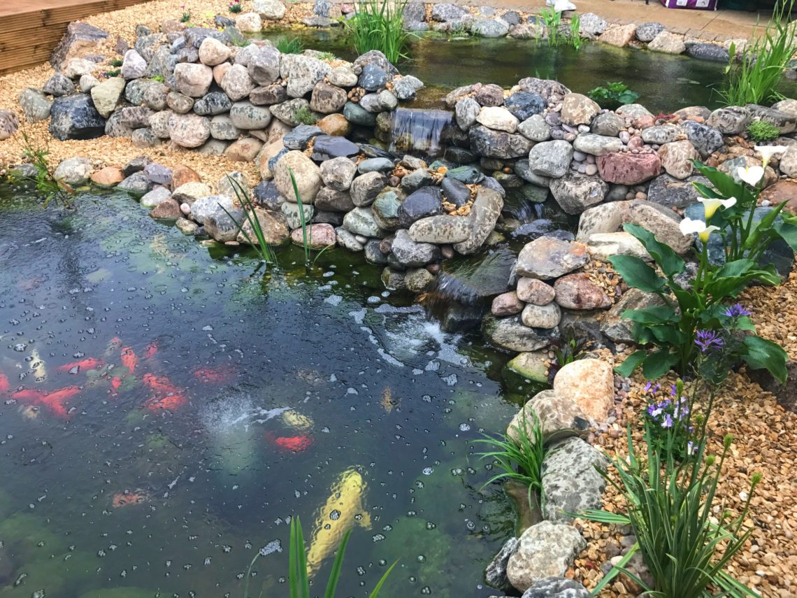 Koi pond wildlife