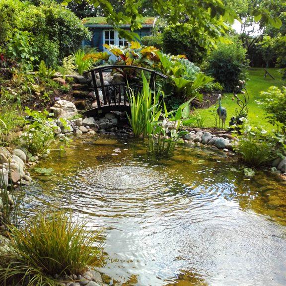Pond bridge wildlife
